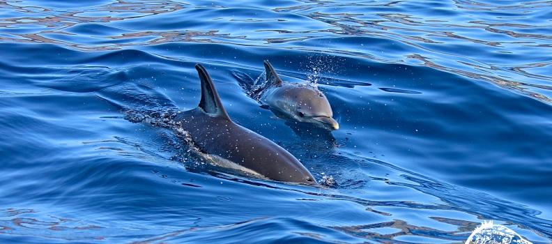 Avistamento de Cetáceos