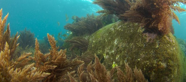 Centro de Mergulho Scorpio Madeira