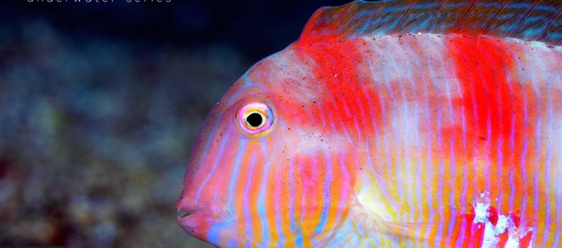 Espécies subaquáticas